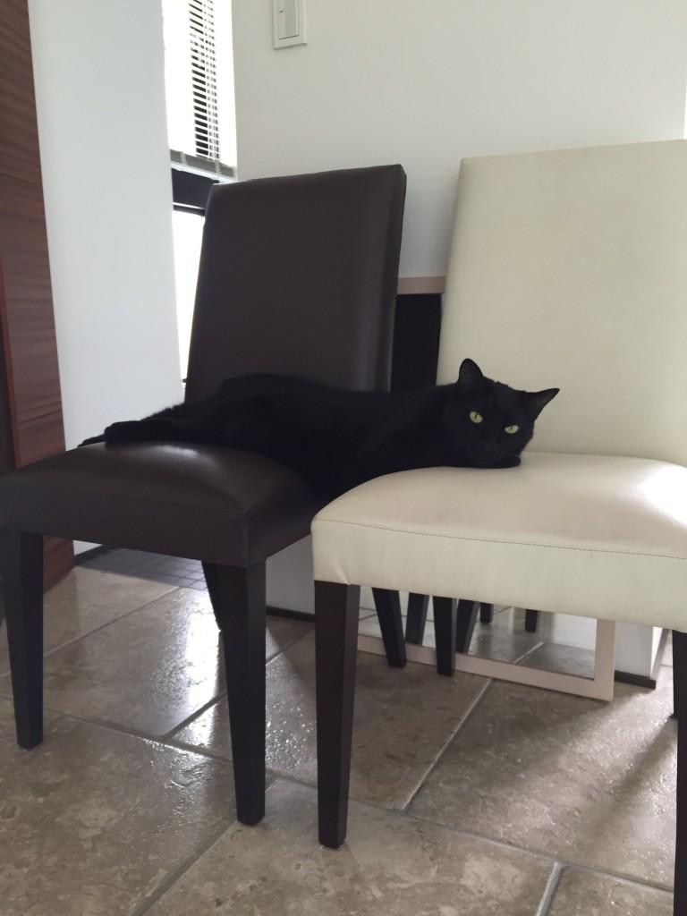 BIG!でも猫❓バランス感覚はまだ、大丈夫?